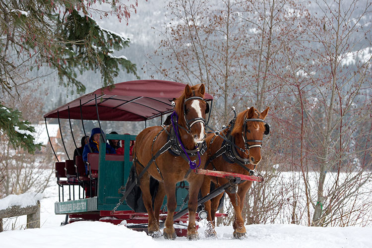 Two horses pull a sleigh across the snow at Green Lake in Whistler.